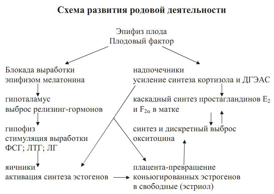 Миометрий