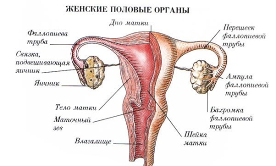 очаговая железистая гиперплазия эндометрия что это такое