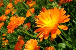 Травы при миоме матки и эндометриозе